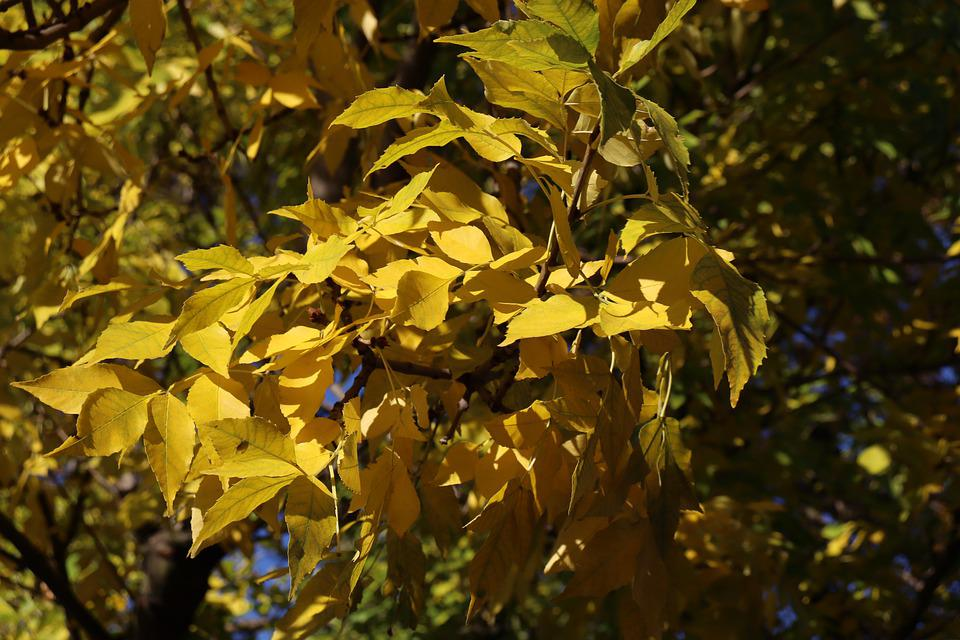 Leaves, Autumn, Season, Nature, Fall, Tree