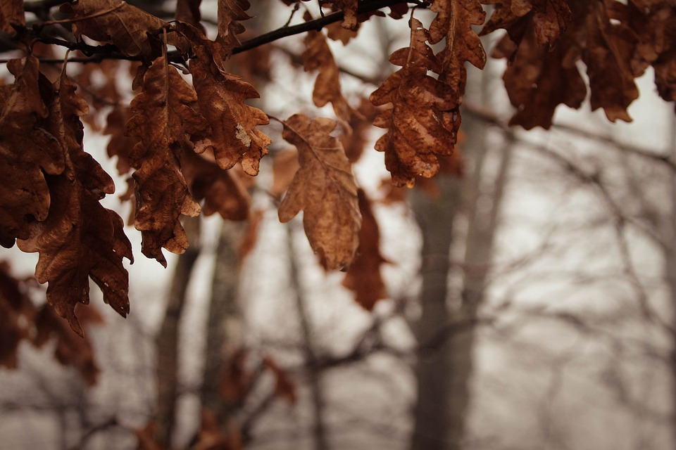 Leaves, Leaf, Tree, Winter