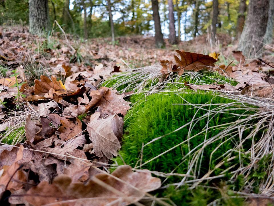 Forest, Moss, Leaves, Nature, Tree, Waldviertel