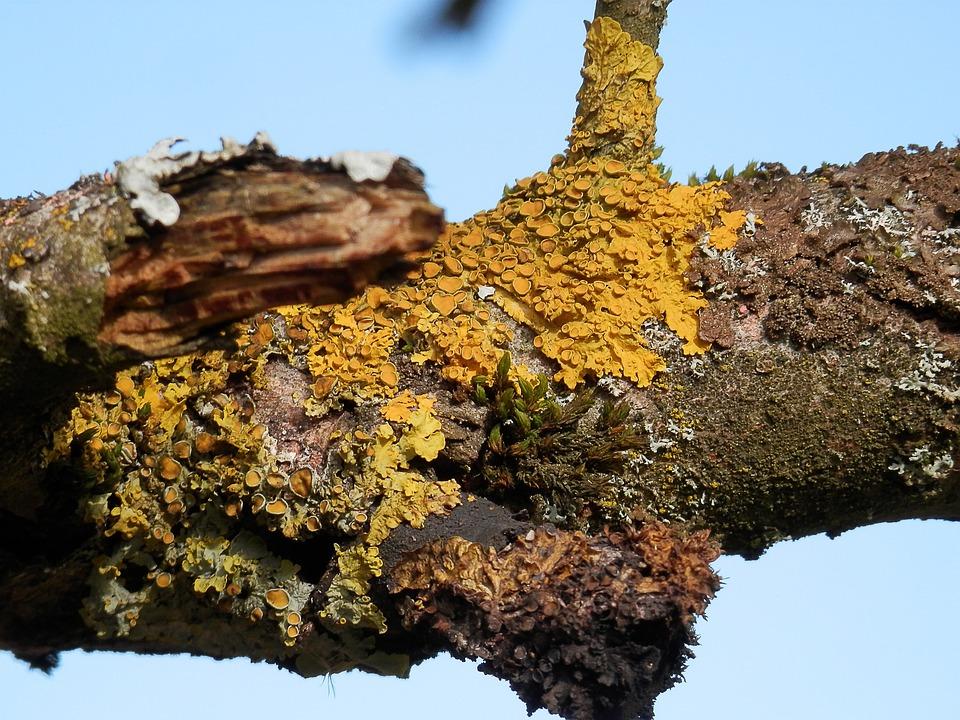 Branch, Nature, Lichen, Tree, Yellow