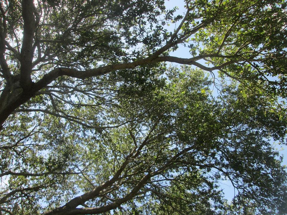 Light, Tree, Bark, Sky, Branches