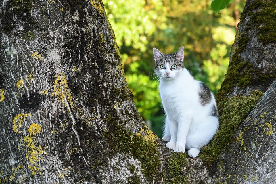Cat, Tree, Green, Light