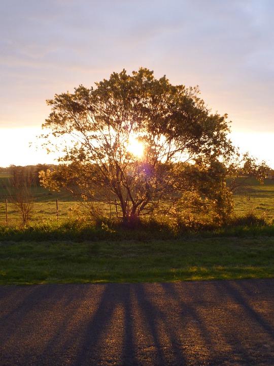 Tree, Sunset, Light, Filter, Filtering, Sunlight