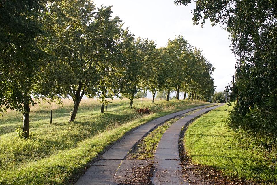 Avenue, Curve, Trees, Landscape, Tree Lined Avenue