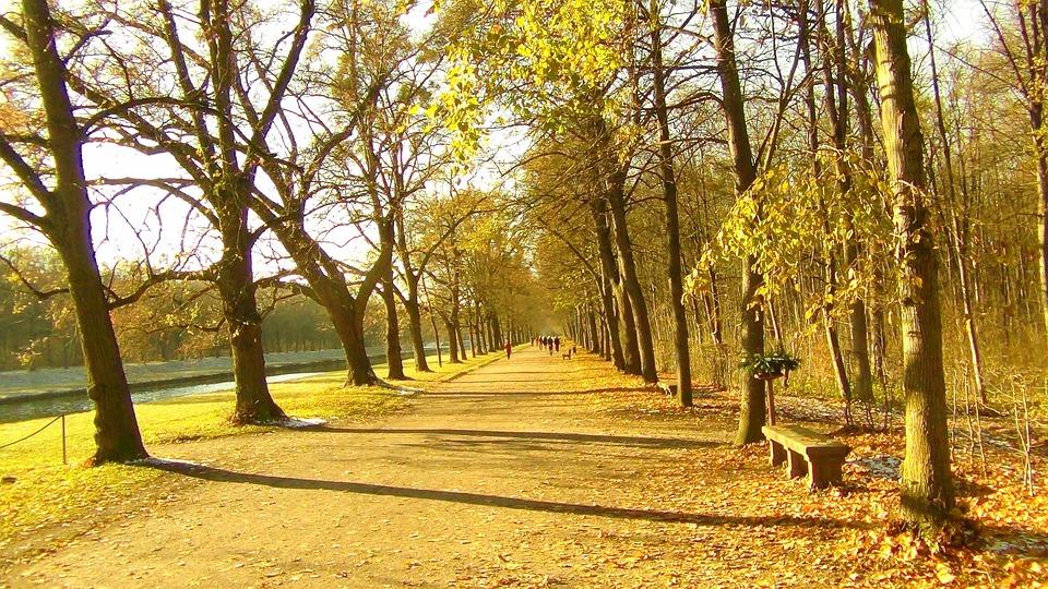 Away, Avenue, Trees, Nature, Tree Lined Avenue, Walk