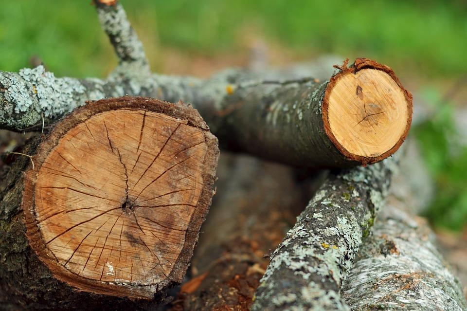 Wood, Tree, Nature, Tree Log, Bark, Firewood, Natural