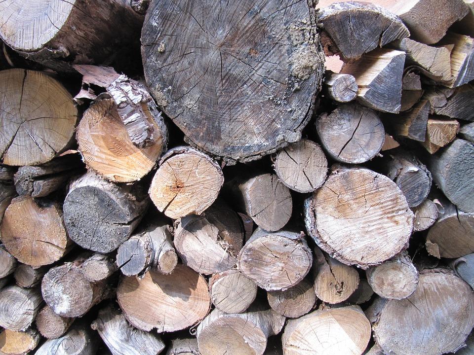 Tree, Wood, Bark, Forest, Log