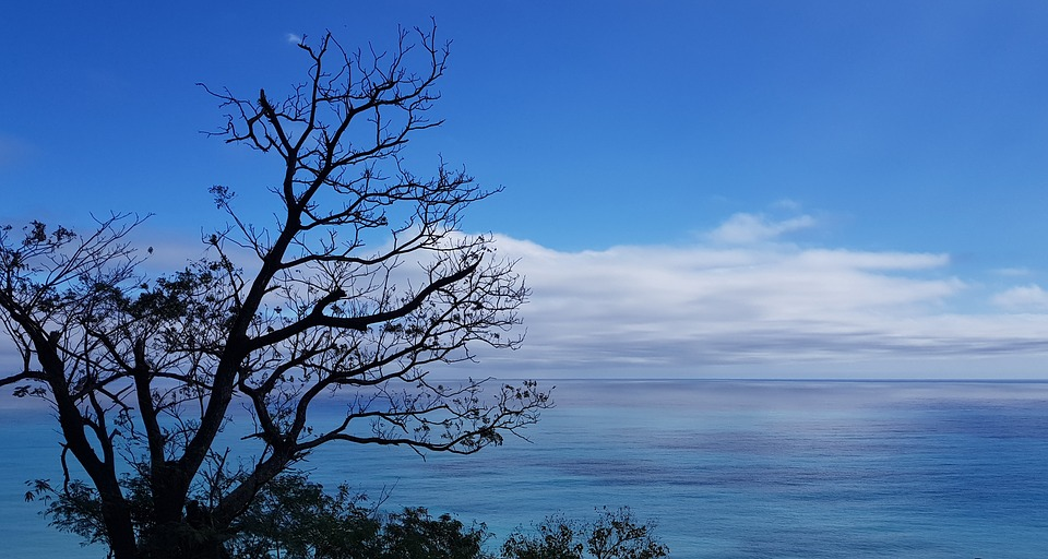 Nature, Landscape, Tree, Sky, Outdoor, Marine, Blue Sky