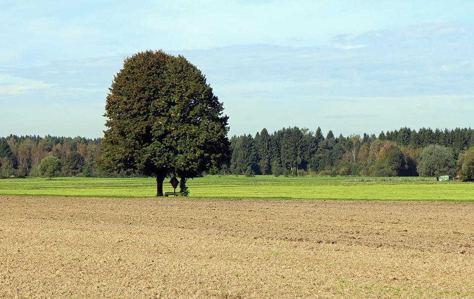 Arable, Agriculture, Tree, Individually, Field, Meadow