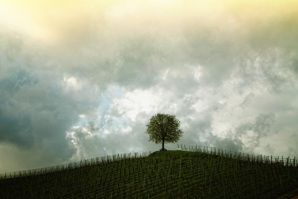 Tree, Hill, Vines, Landscape, Mood, Sky