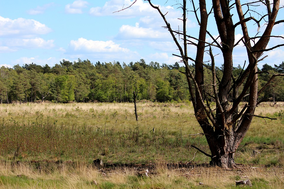 Moor, Barren Landscape, Tree, Nature Reserve, Mood