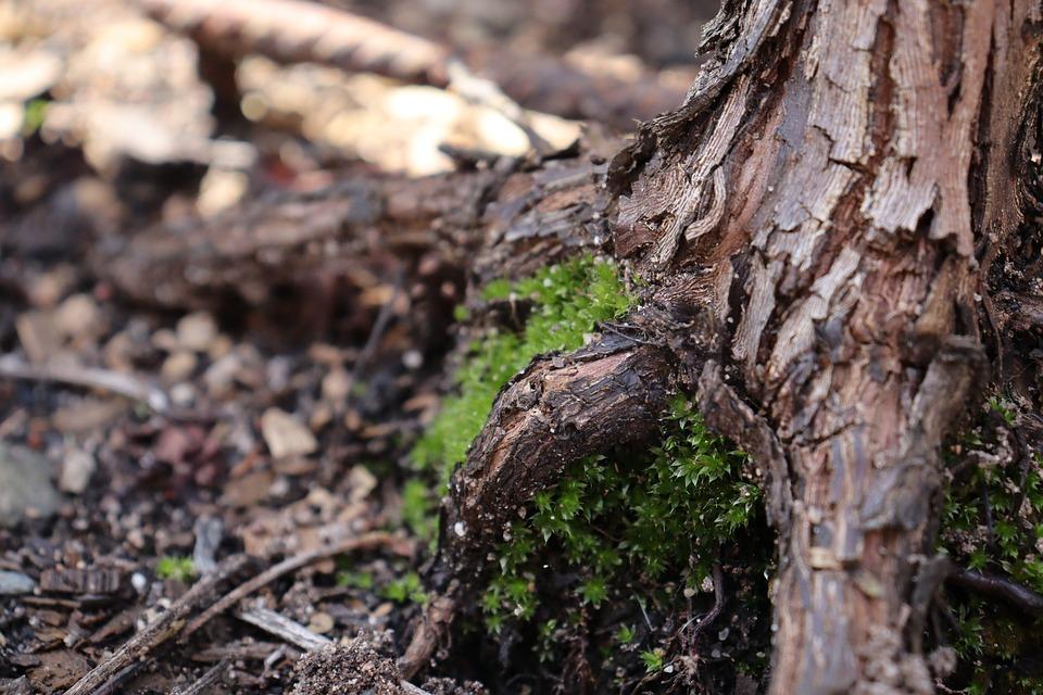 Moss, Tree, Tree Stump, Forest, Nature, Stump