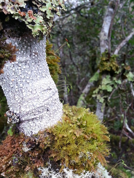 Tree, Moss, Forest, Woods, Bush, White, Green, Bark