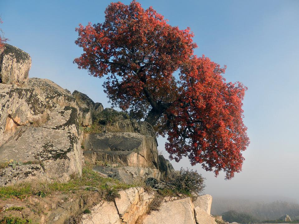 Tree, Rocks, Mountain, Nature, Red
