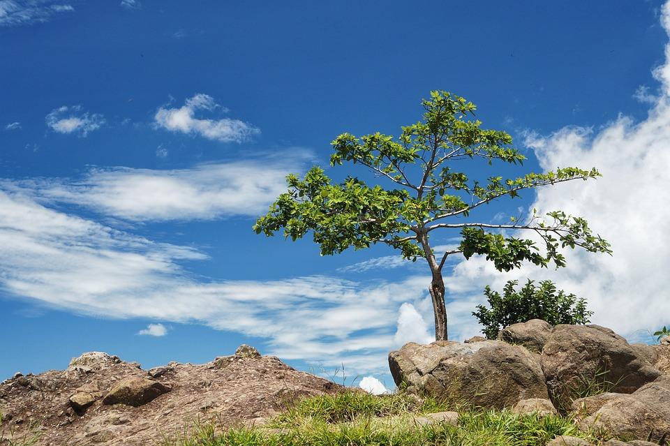 Arbol Solo, Tree, Panoramic, Blue Sky, Mountains