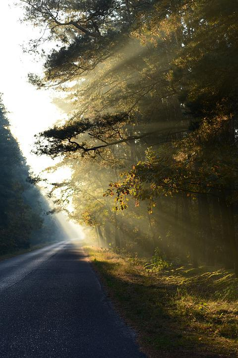 Light, Tree, Trees, Forest, Mood, In The Fall, Mystical