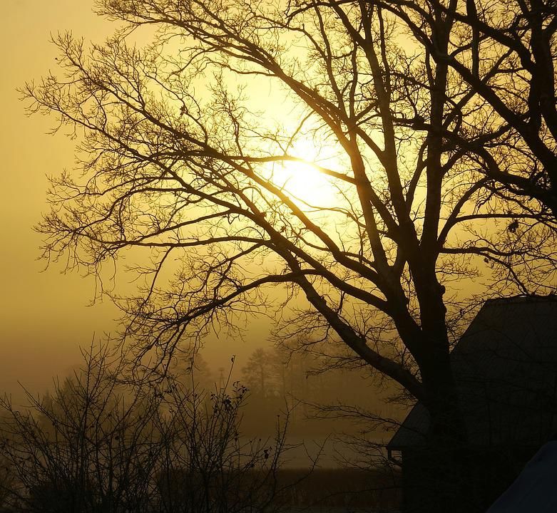 Tree, Konary, The Sun, Winter, Leafless, Naked, Morning