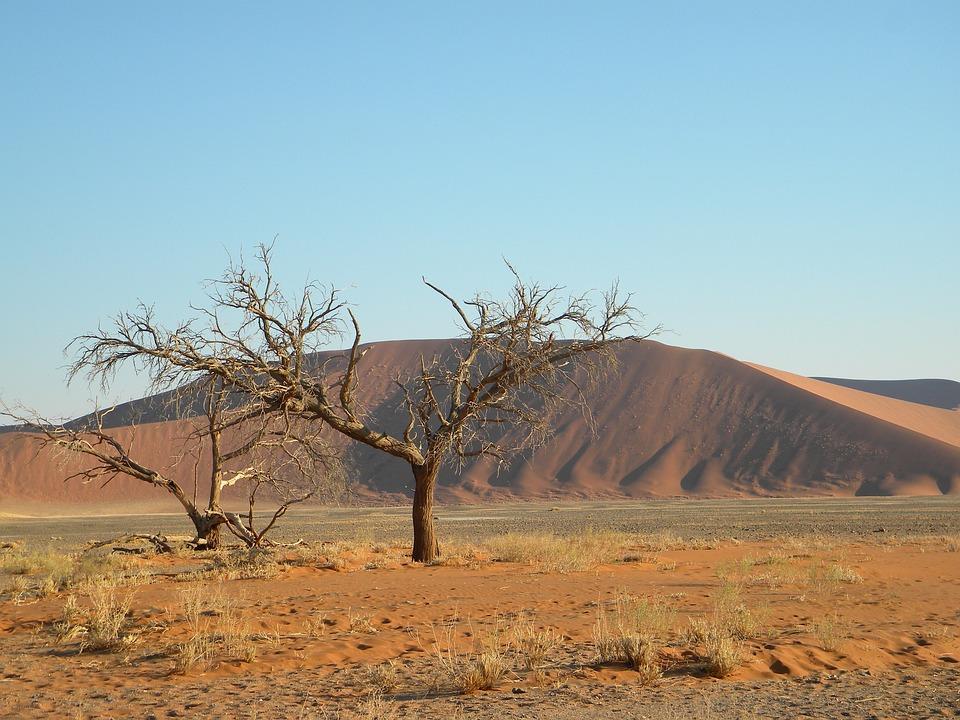 Namibia, Namib, Desert, Tree, Dead, Sand, Red, Freedom