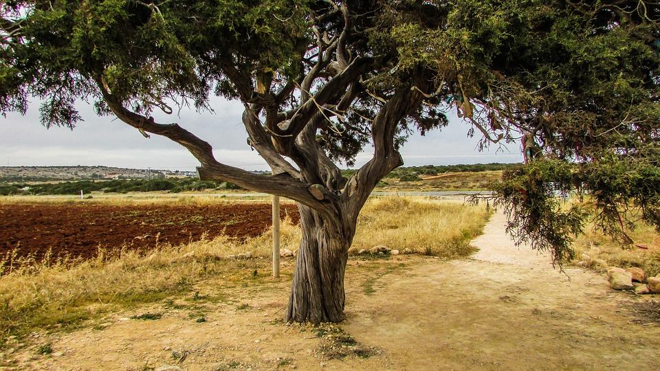 Cyprus, Cavo Greko, Tree, Nature