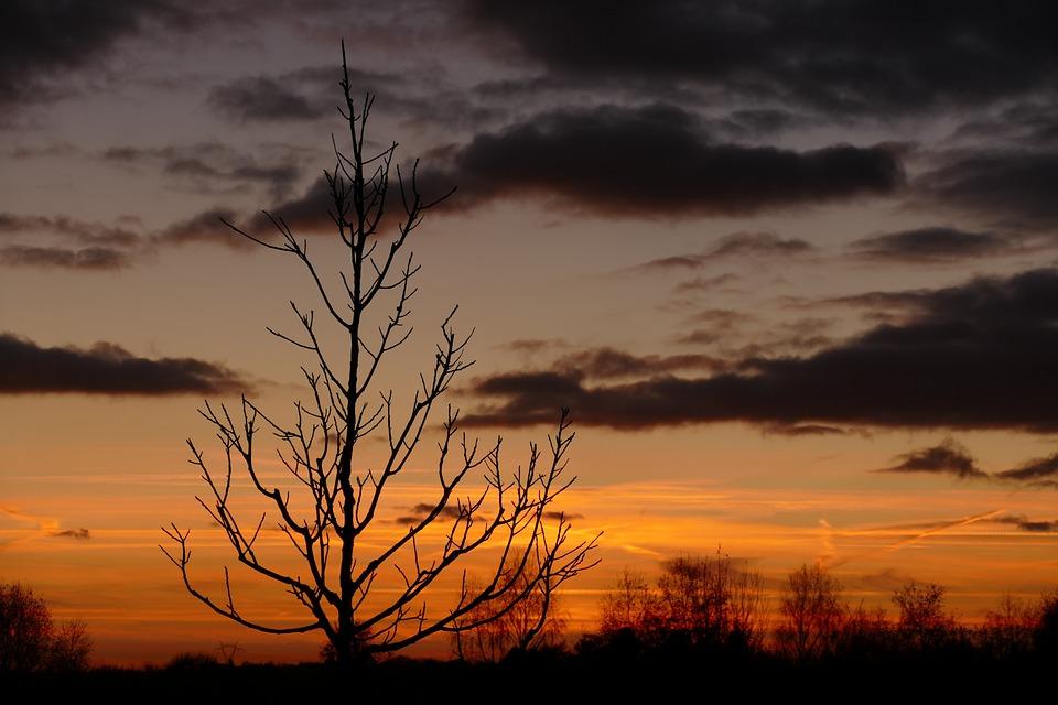 Sunset, Dawn, Nature, Dusk, Sky, Panoramic, Tree