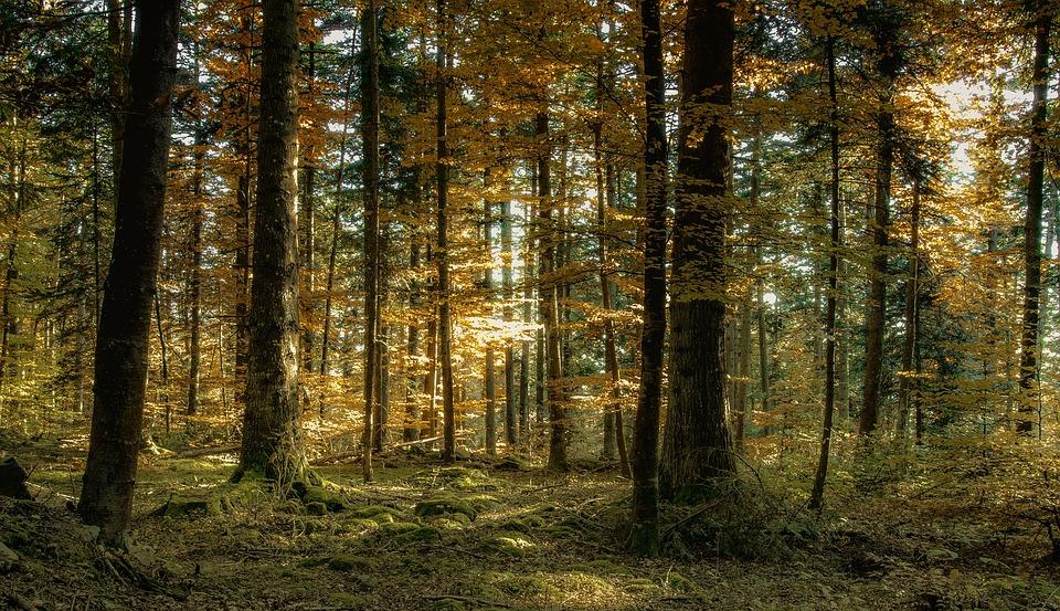 Autumn, Forest, Landscape, Nature, Tree, Auvergne, Fall