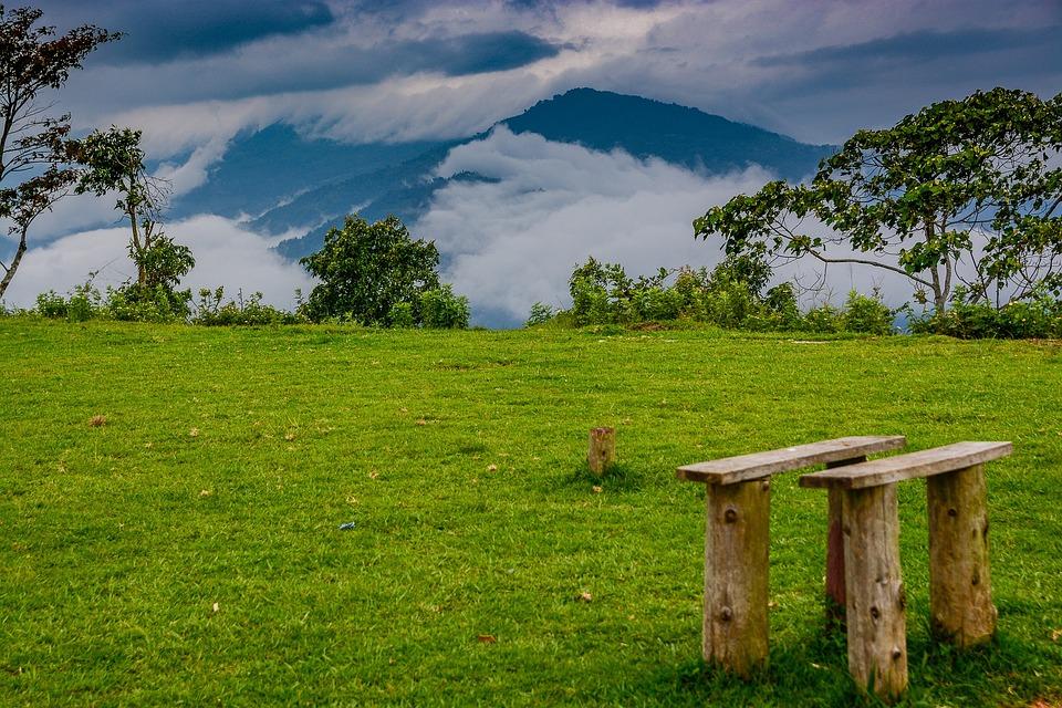 Grass, Landscape, Tree, Nature, Hayfield, Field