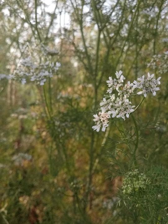 Nature, Flora, Flower, Season, Tree