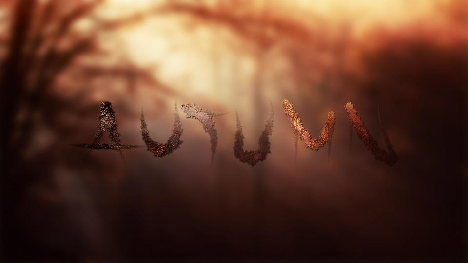 Autumn, Text, Tree, Forest, Nature, Foliage, Light