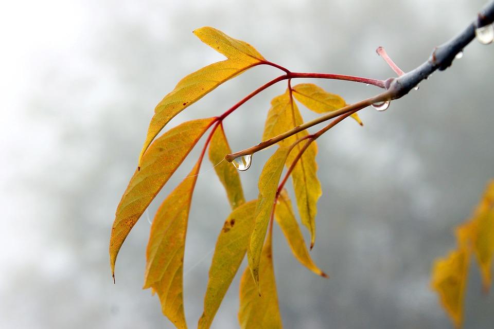 Autumn, Nature, Macro, Trees, Forests, Foliage, Tree