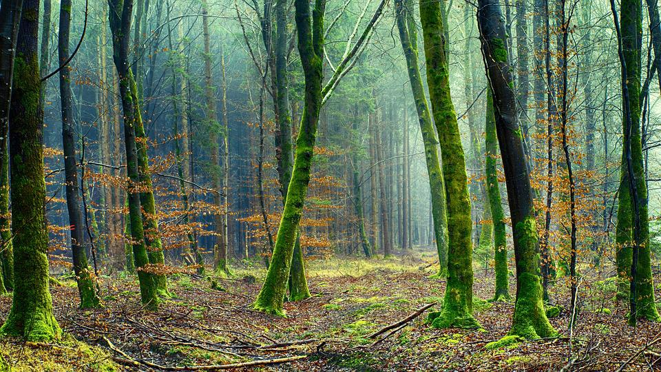 Nature, Wood, Tree, Forest, Green, Forest Floor