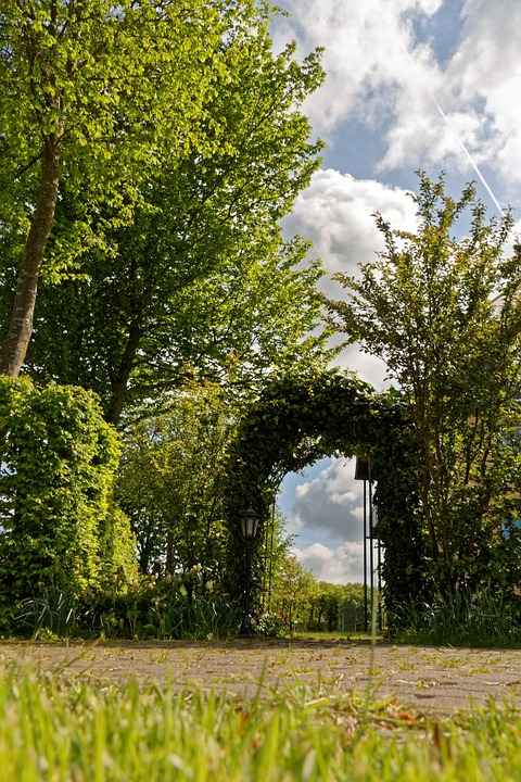 Archway, Rose Arch, Nature, Garden, Tree, Ivy
