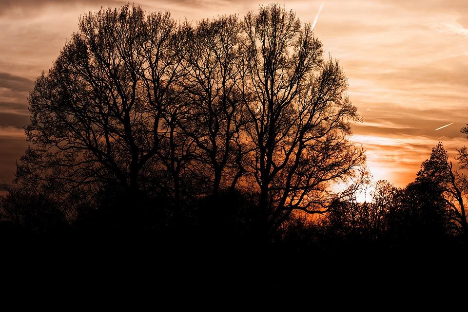 Tree, Landscape, Nature