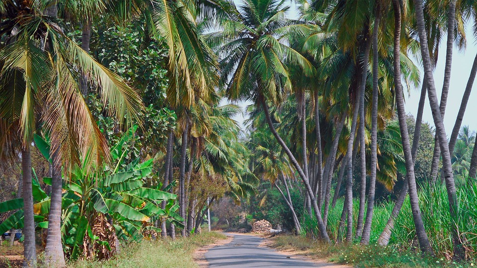 Nature, Landscape, Coconut, Tree