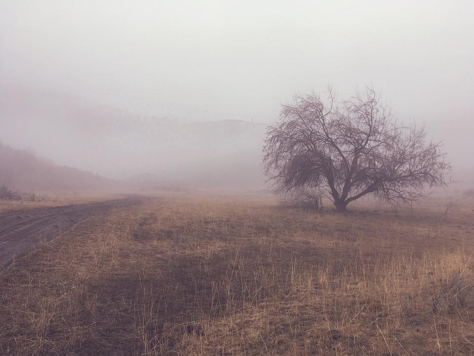free photo tree nature landscape mist fog light foggy
