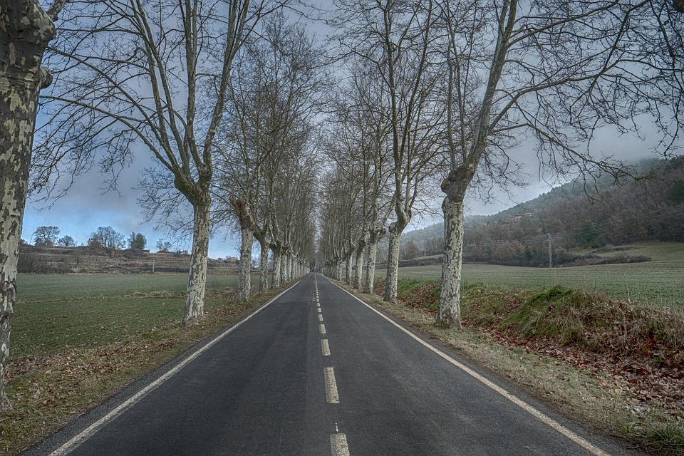 Road, Tree, Lane, Landscape, Nature, Rural Area