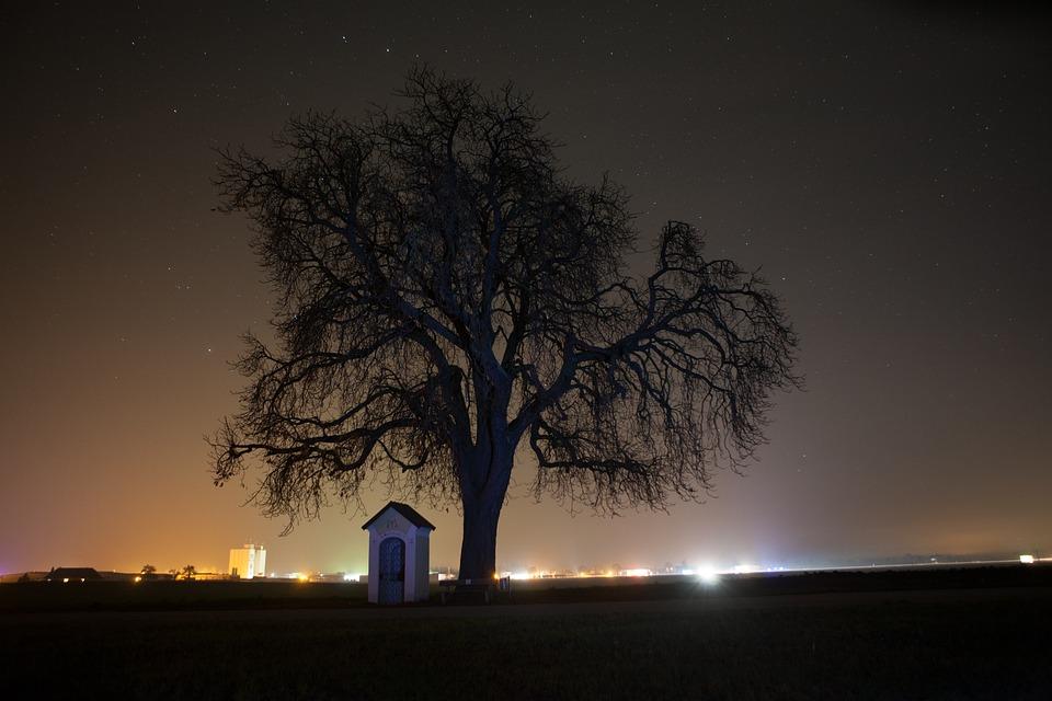 Tree, Night, Sky, Star, Starry Sky, Nature, Chapel