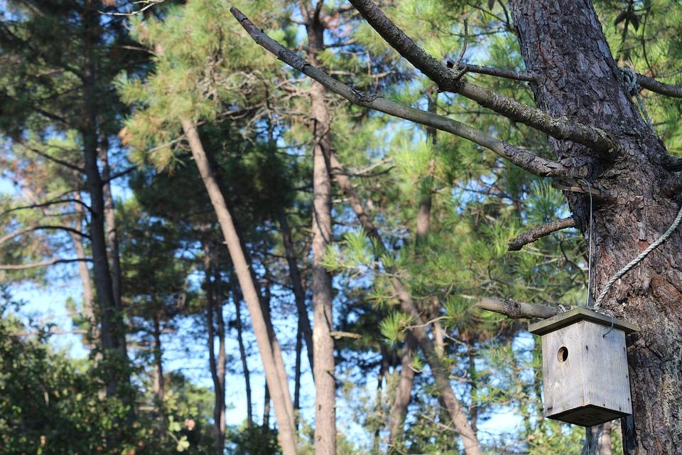 Tree, Nature, Wood-fibre Boards, Outdoor, Landscape