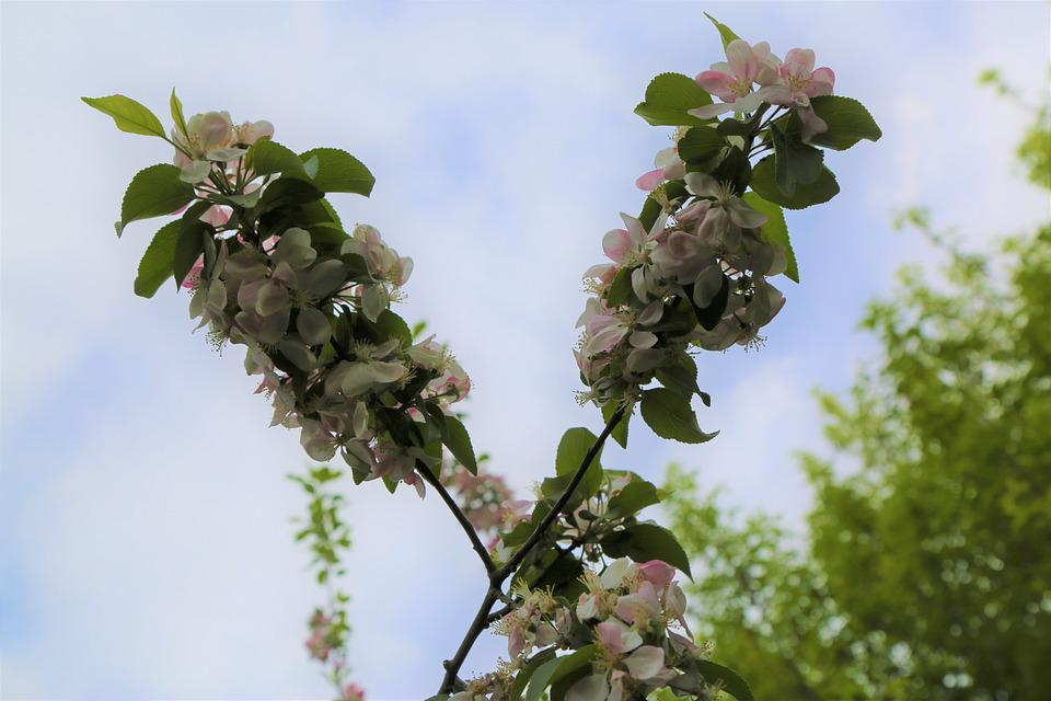 Tree, Leaves, Plant, Nature, Flower, Outdoor