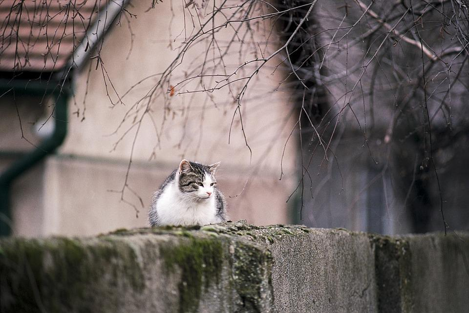 Nature, Tree, Outdoors, Animal, Cat, Cute, Natural