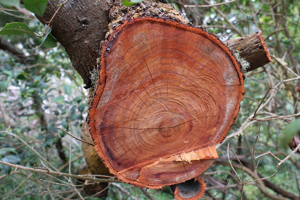 Wood, Tree, Nature, Plant, Súber, Of Wood, Outdoors