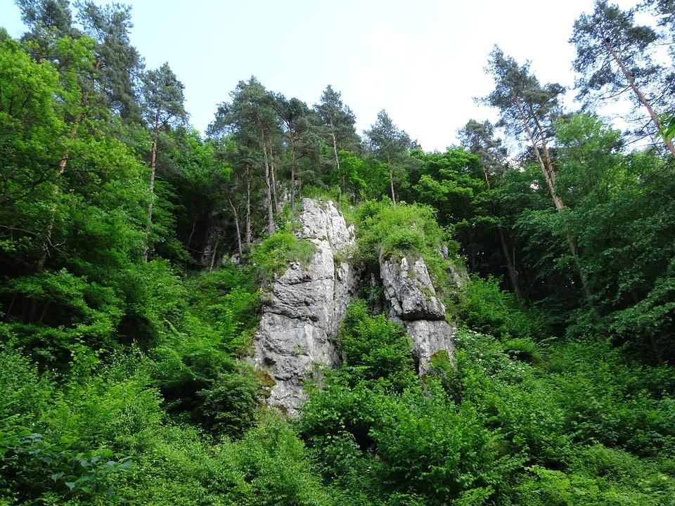 Rocks, Tree, Landscape, Nature, Poland, Malopolska