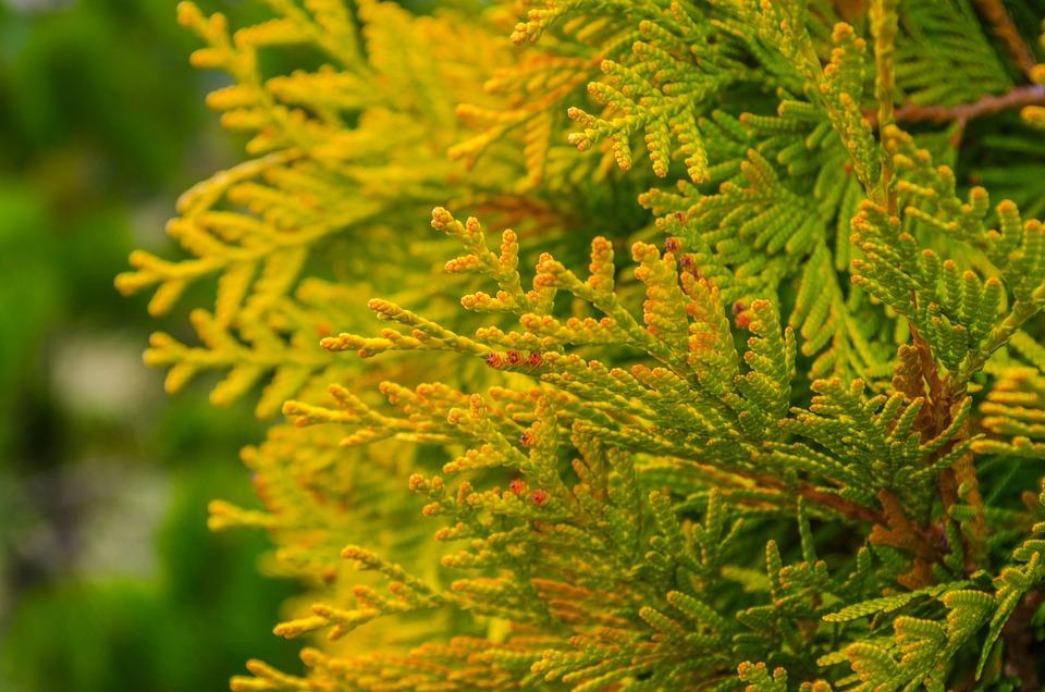 Spruce, Nature, Tree, Green Fir-tree, Spring, Seasons
