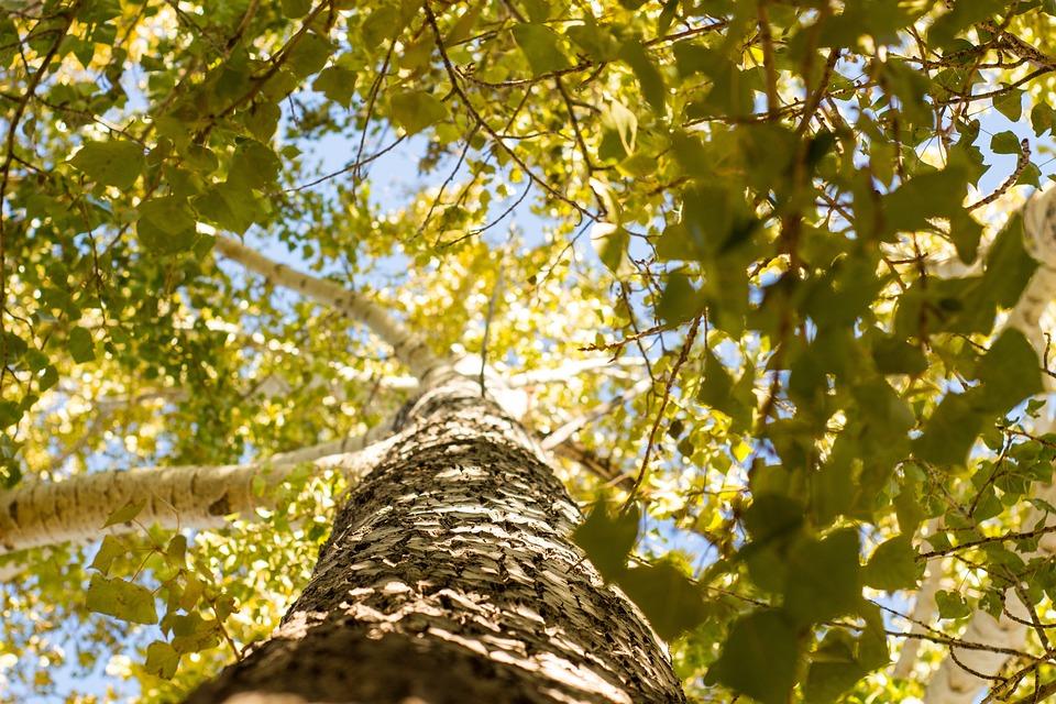 Tree, Sunshine, Landscape, Nature, Trees, Sunlight, Sky