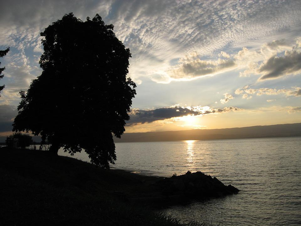 Tree, Sun, Sunset, Nature, Beach, Landscape