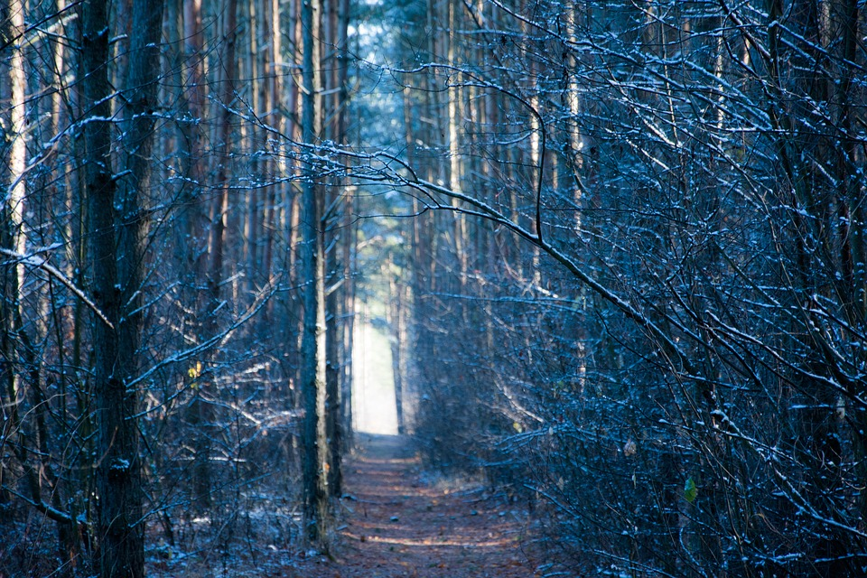 Forest, Winter, Poland, Tree, Nature, The Path