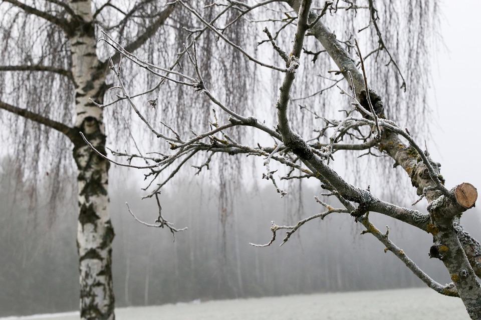 Tree, Nature, Winter