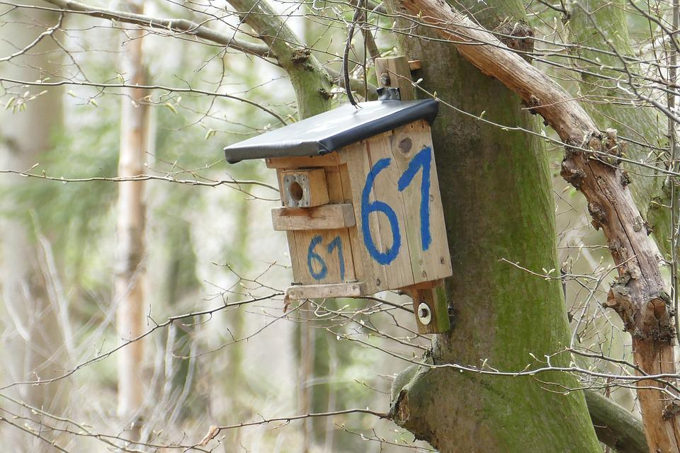 Nesting Box, Forest, Tree