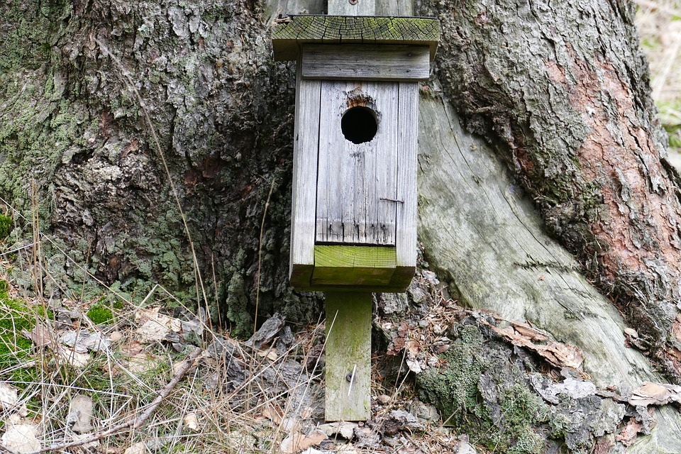 Nesting Box, Forest, Nature, Tree