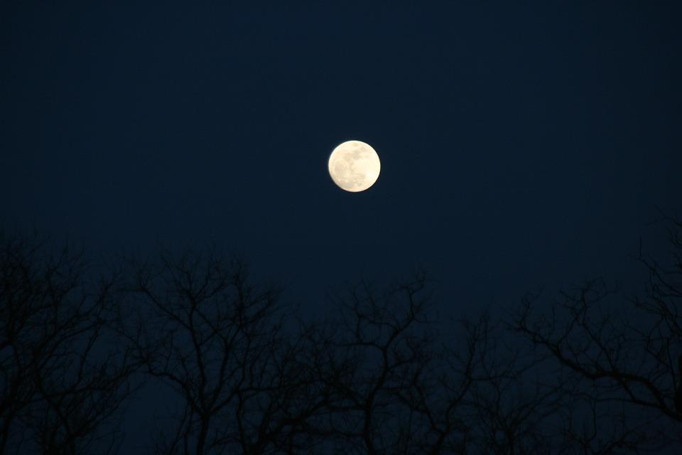 Full Moon, Tree, Night