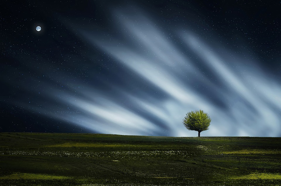 Tree, Natur, Nightsky, Meadow, Grass, Landscape
